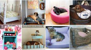 20 einfache DIY Hundebetten und Kisten, die Sie Ihren Welpen verwöhnen lassen