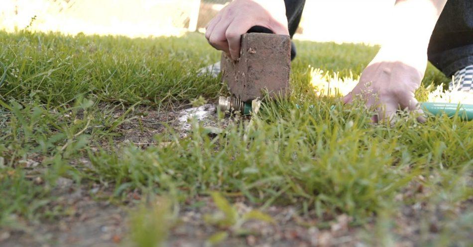 7 Überraschend einfache DIY Möglichkeiten, Ameisen zu Hause loszuwerden