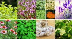 14 Heilkräuter zum Pflanzen in Ihrem Kräutergarten - Sie sind lecker und medizinisch!