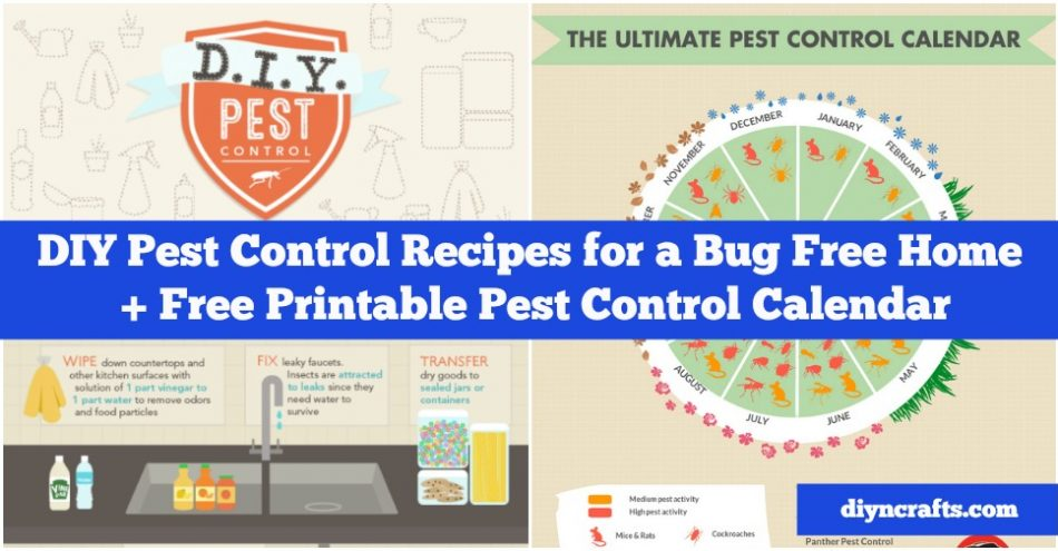 DIY Schädlingsbekämpfung Rezepte für ein Bug Free Home + Schädlingsbekämpfung Kalender