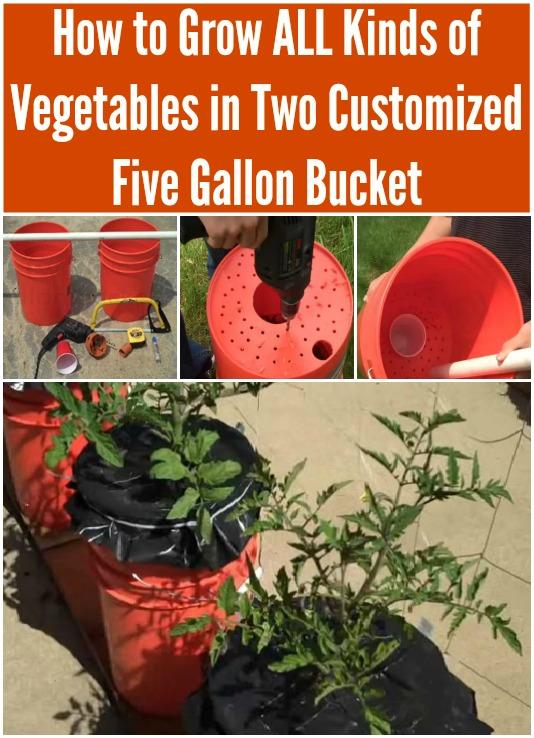 Wie man alle Arten Gemüse in zwei kundengebundenen fünf Gallonen Eimern anbaut