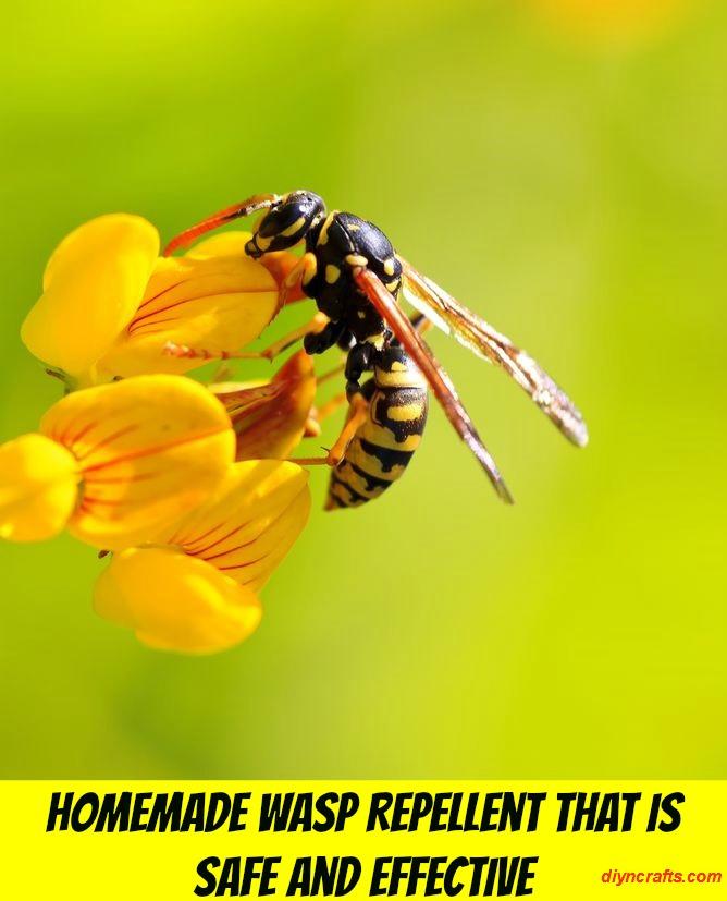 Hausgemachte Wasp Repellent Das ist sicher und effektiv