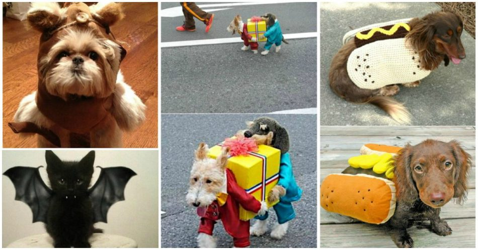 Diese 24 Halloween Pet Kostüme können einfach besser als deine eigenen sein!