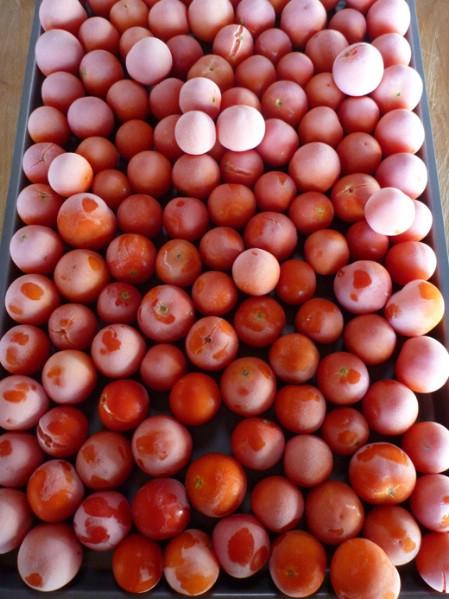 Top 8 beliebtesten Möglichkeiten, Tomaten für den Winter zu erhalten