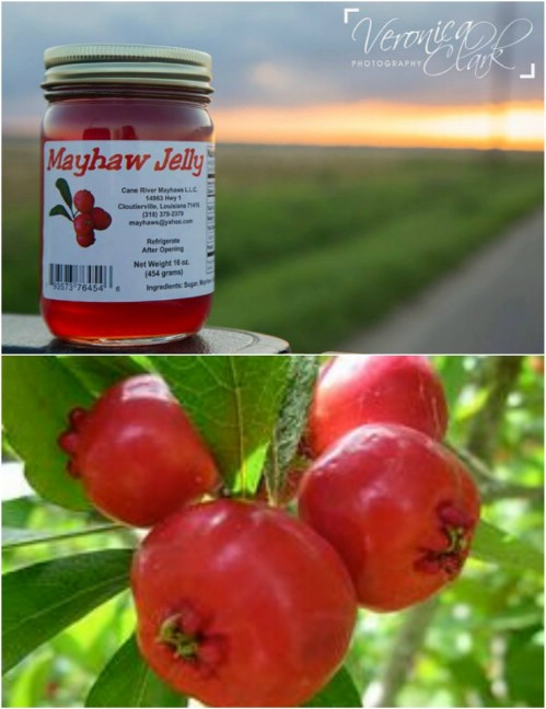 30 hausgemachte Obst Marmeladen und Gelees, die Sie auf jeden Fall diesen Sommer machen möchten