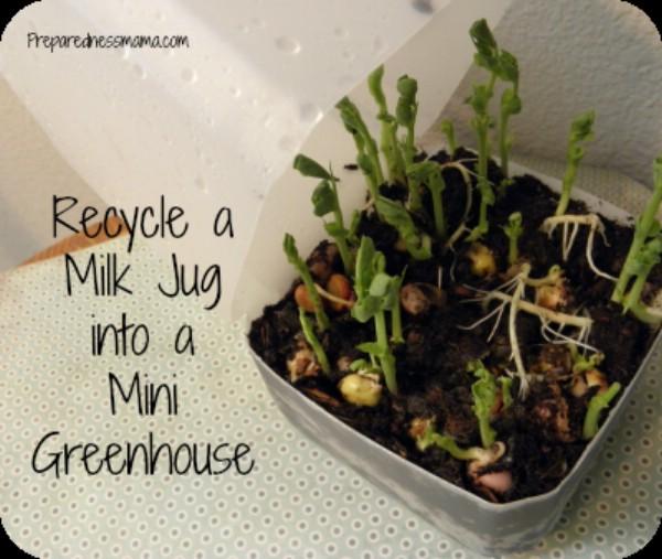 20 Upcycled Samen-Starter-Töpfe, die Sie leicht zu Hause machen können