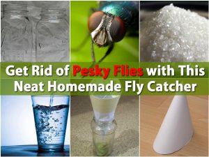 Befreien Sie sich von lästigen Fliegen mit diesem ordentlichen selbst gemachten Fliegen-Fänger