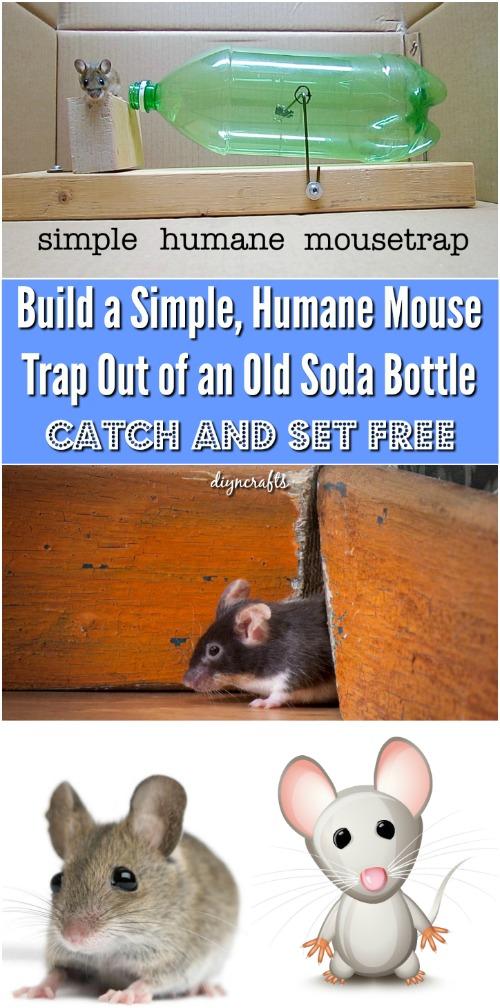 Wie man eine einfache, humane Mausefalle aus einer alten Soda-Flasche baut