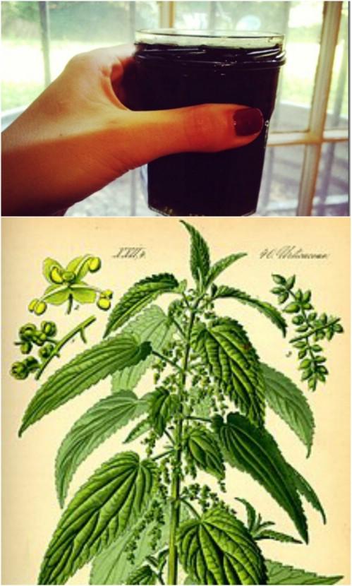 10 hausgemachte Rezepte zur Befreiung von Heuschnupfen und saisonalen Allergien