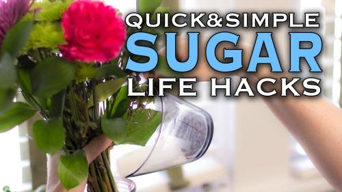 6 Überraschende Alternativen für Zucker, die Sie nicht glauben