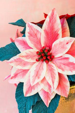 Papier Weihnachtsstern Blumen