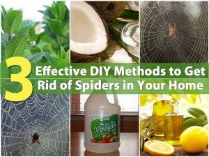 3 effektive DIY-Methoden, um Spinnen in Ihrem Haus loszuwerden