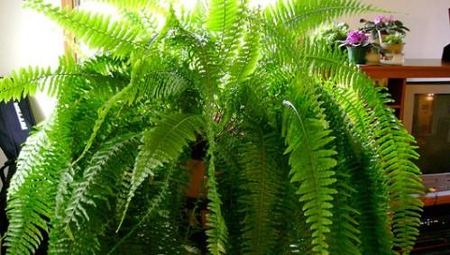 Top 10 von der NASA zugelassene Zimmerpflanzen zur Verbesserung der Raumluftqualität